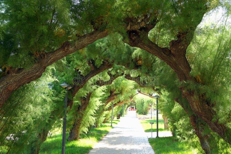 Ramas de árboles bajo la forma de arco foto de archivo