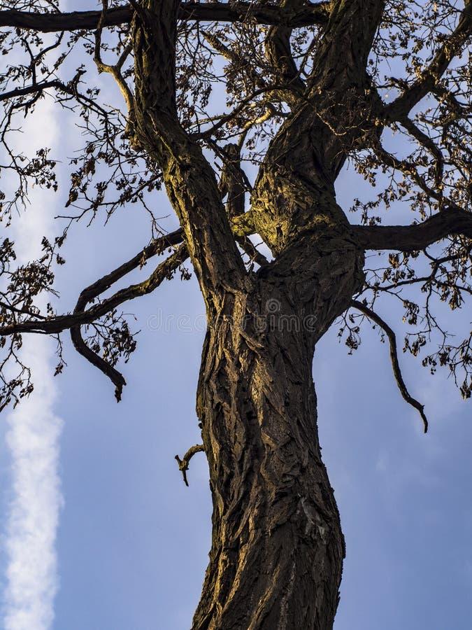 Ramas de árboles contra el cielo imágenes de archivo libres de regalías