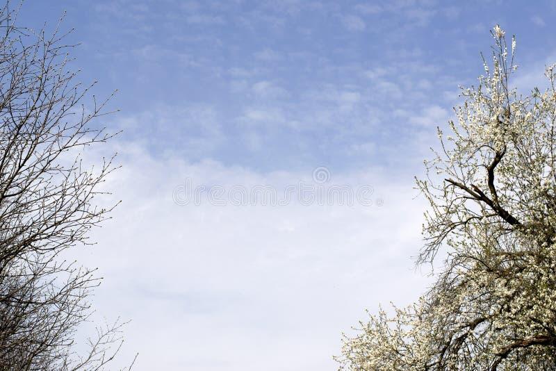 Ramas de árboles contra el cielo azul Parque verde hermoso en el fondo del cielo foto de archivo libre de regalías