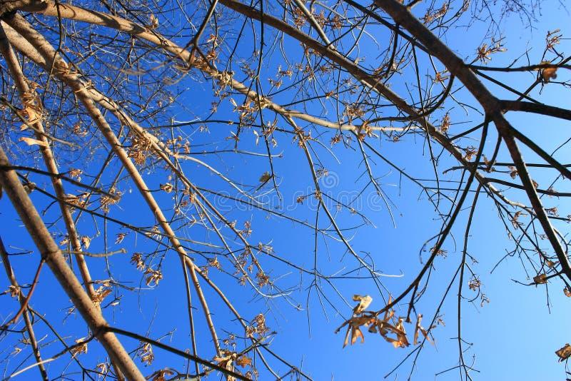 Ramas de árboles contra el cielo del invierno imagen de archivo