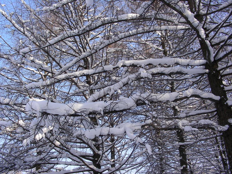 Ramas de árboles, cubiertas con las capas de nieve, colocándose en el sol, cielo claro fotos de archivo