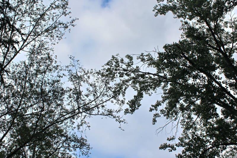 Ramas de árboles en fondo del cielo azul y de las nubes fotos de archivo libres de regalías