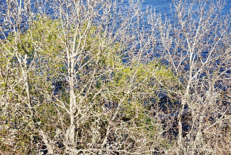 Ramas de árboles en la orilla contra el agua azul En el fondo, un río es visible foto de archivo