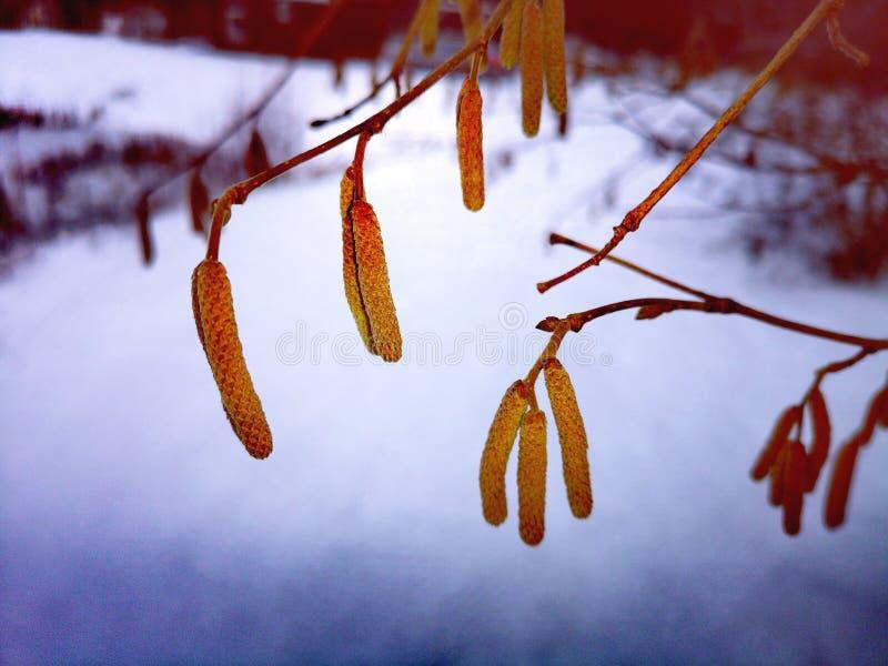 Ramas de árboles en una nieve blanca fotografía de archivo libre de regalías