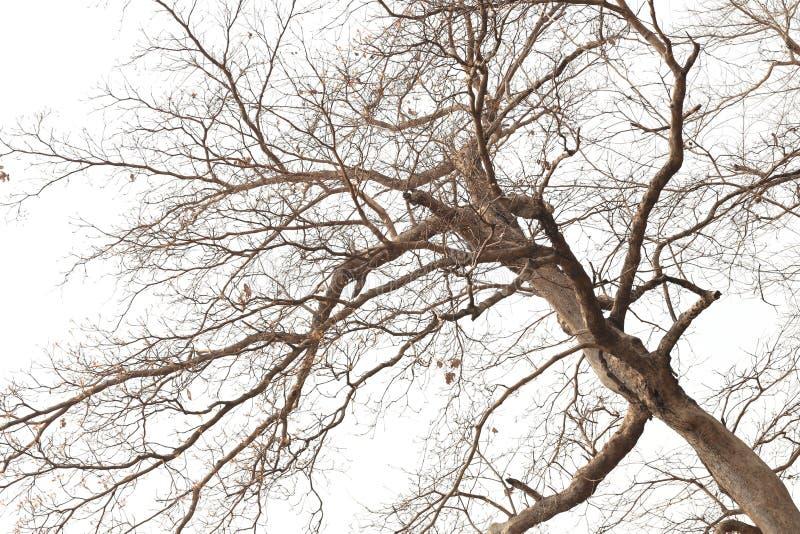 Ramas De árboles Muertos En Bosques Tropicales Imagen de archivo ...