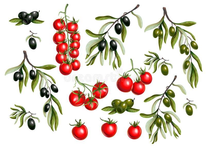 Ramas de aceitunas negras y tomate de cereza aislado en el fondo blanco, ejemplo del vector ilustración del vector