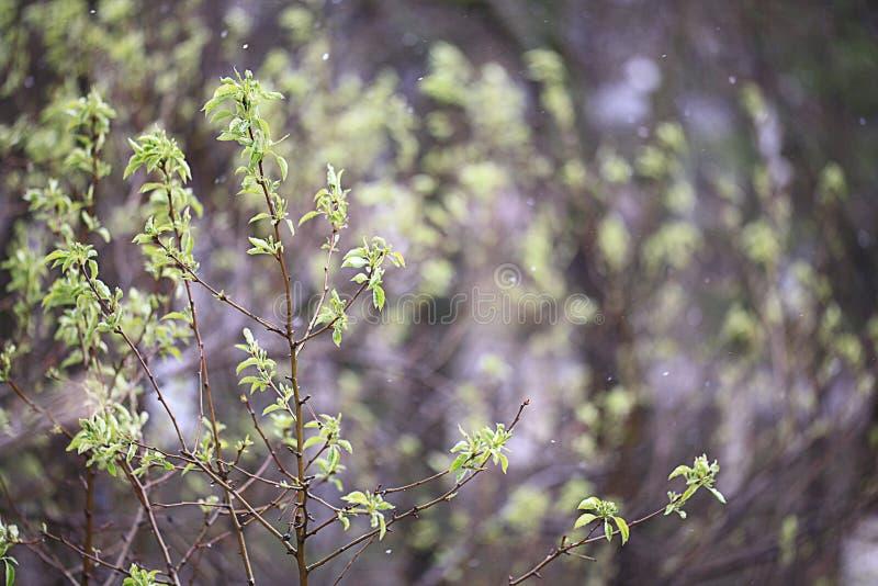 Ramas de la lluvia fresca de las hojas imagen de archivo