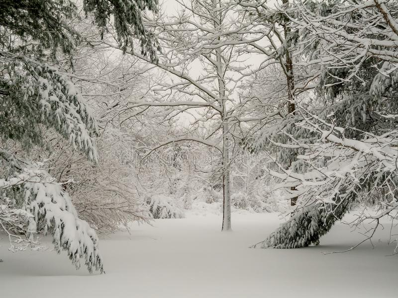 Ramas de la nieve fotografía de archivo libre de regalías