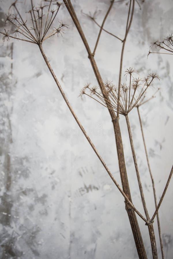 Ramas de la planta con textura del fondo del muro de cemento fotos de archivo
