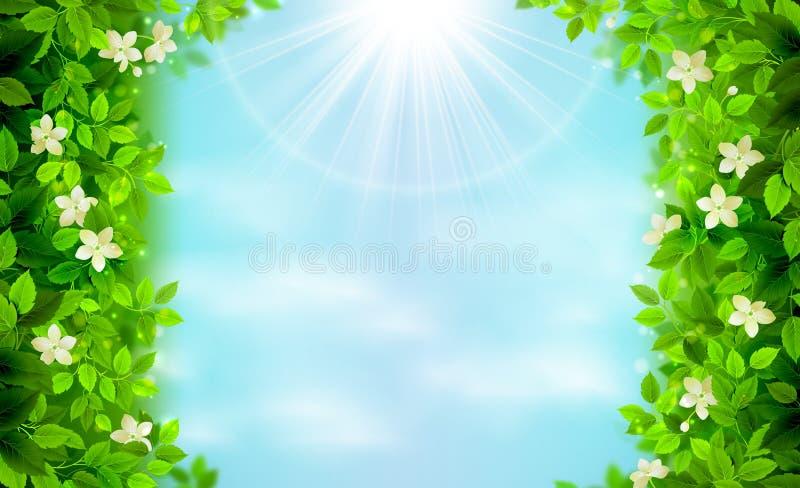 Ramas de la primavera y del verano con las hojas frescas del verde en el cielo brillante azul ilustración del vector