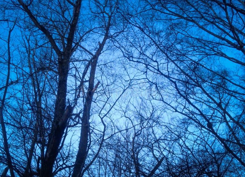 Ramas de las noches blancas del clima frío ruso fotografía de archivo