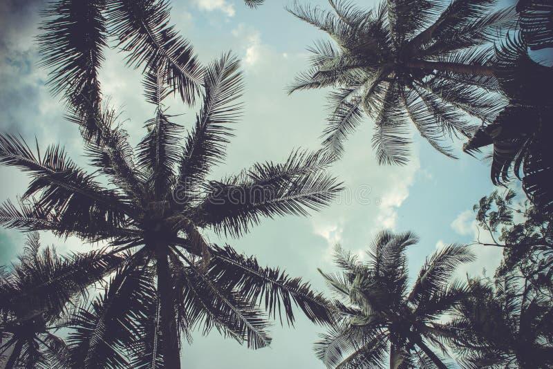 Ramas de las palmas de coco debajo del cielo azul imágenes de archivo libres de regalías