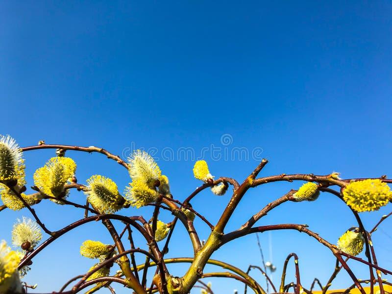 Ramas de los árboles, arbustos contra el cielo azul fotos de archivo