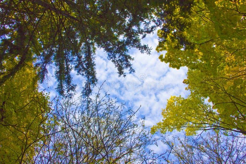 Ramas de los árboles en el cielo fotografía de archivo