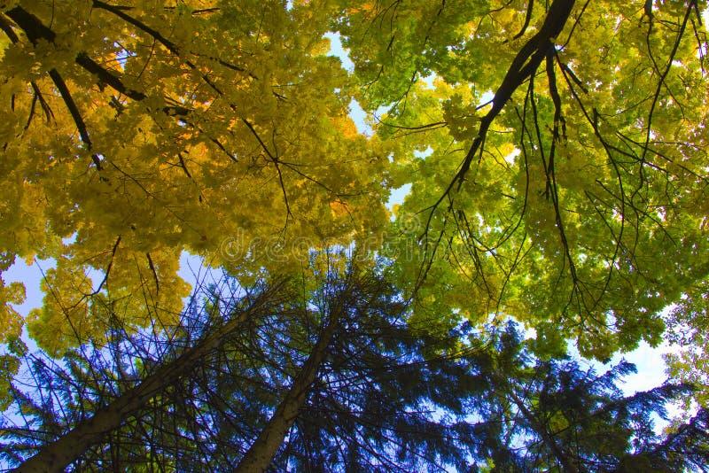 Ramas de los árboles en el cielo foto de archivo libre de regalías