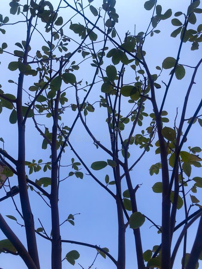 Ramas de ?rbol contra el cielo azul foto de archivo