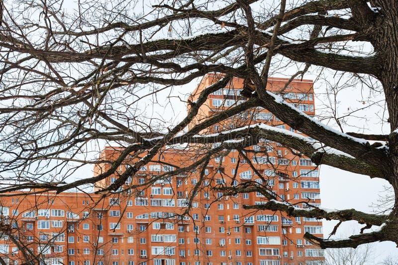 Ramas de roble desnudas y edificio de apartamentos urbano foto de archivo libre de regalías