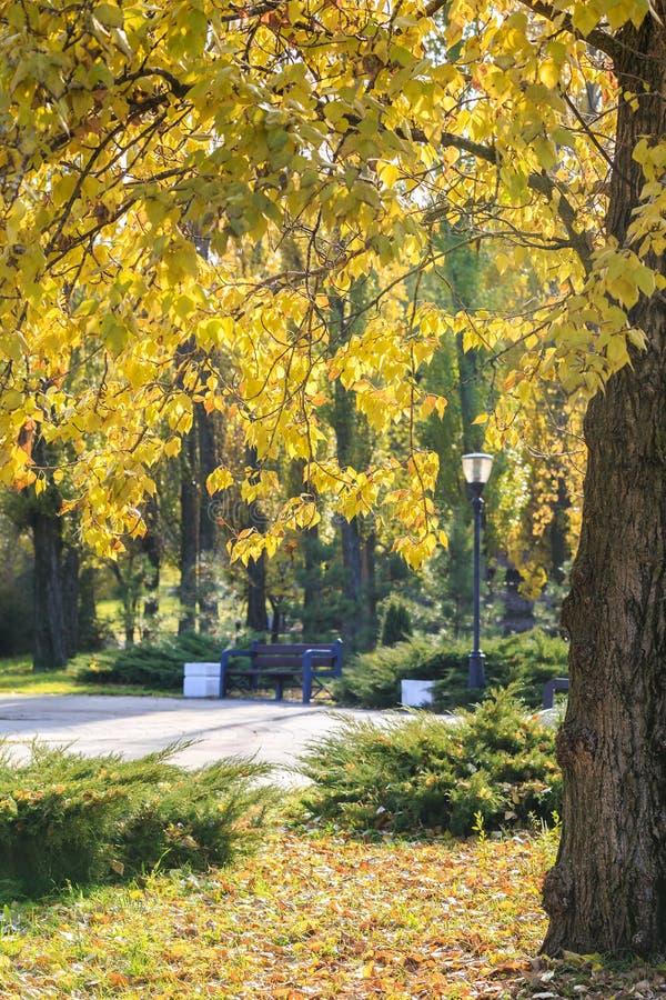 Ramas de un árbol con las hojas amarillas, el banco solitario en un parque en un día soleado del otoño imagenes de archivo