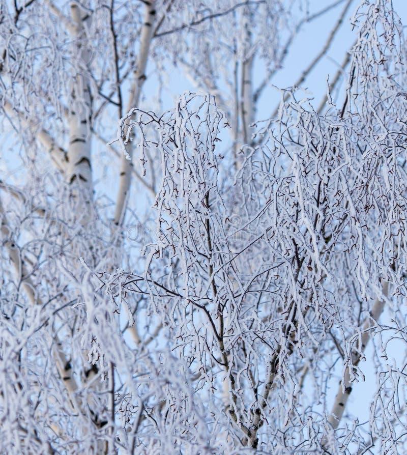 Ramas del abedul Nevado en invierno contra el cielo imagen de archivo