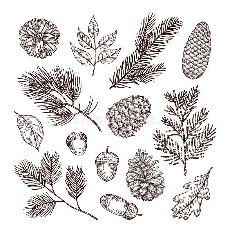 Ramas del abeto del bosquejo Bellotas y conos del pino Elementos del bosque de la Navidad, del invierno y del otoño Vector dibuja stock de ilustración