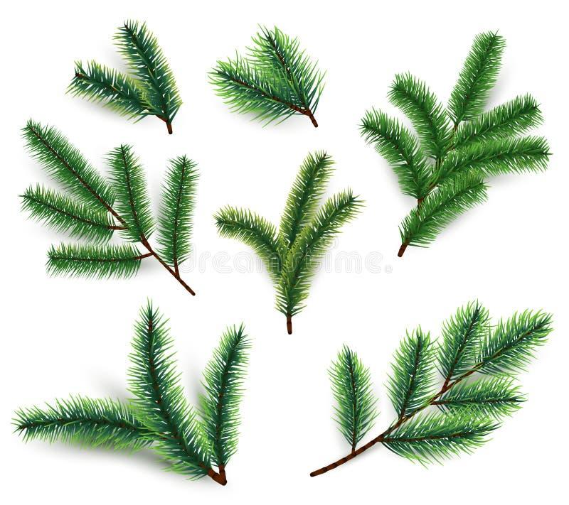 Ramas del abeto Ramificación del árbol de navidad aislada la rama realista de la conífera 3d fijó para la decoración de las vacac libre illustration