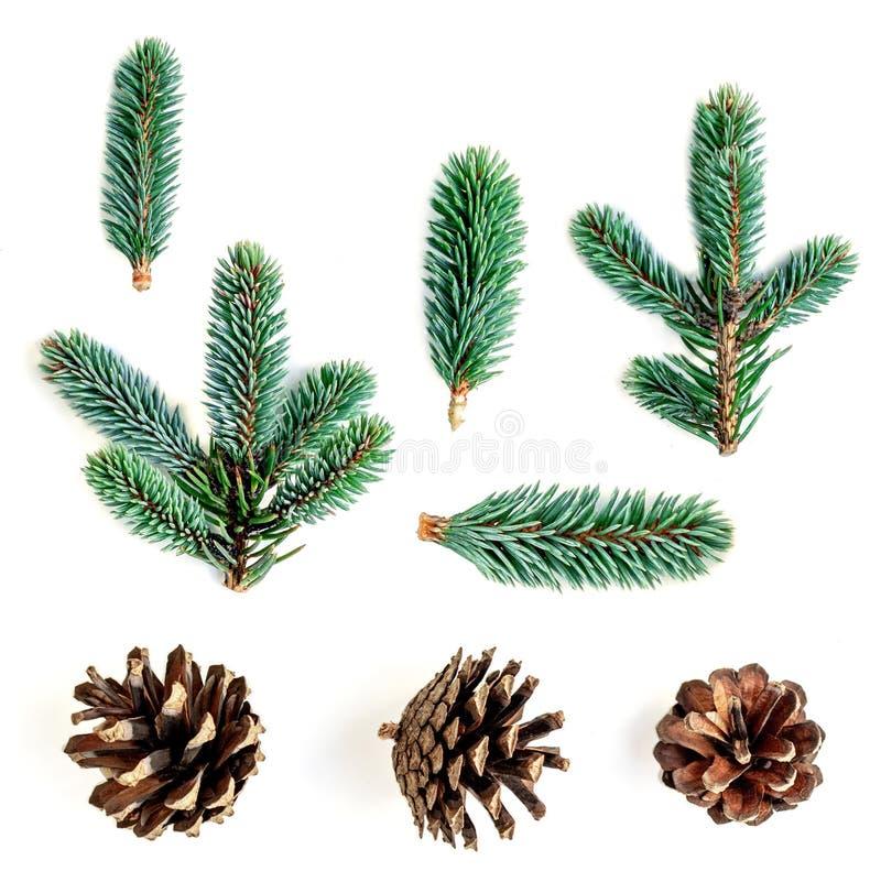 Ramas del abeto y conos del pino aislados en el fondo blanco Collec fotografía de archivo