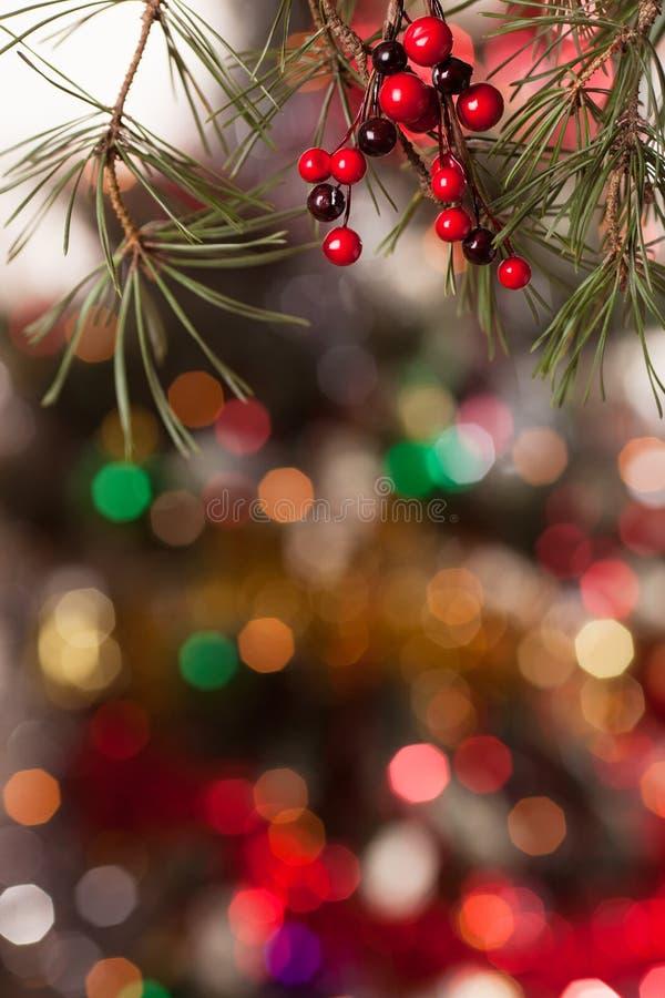 Ramas del pino y bayas rojas en el bokeh foto de archivo