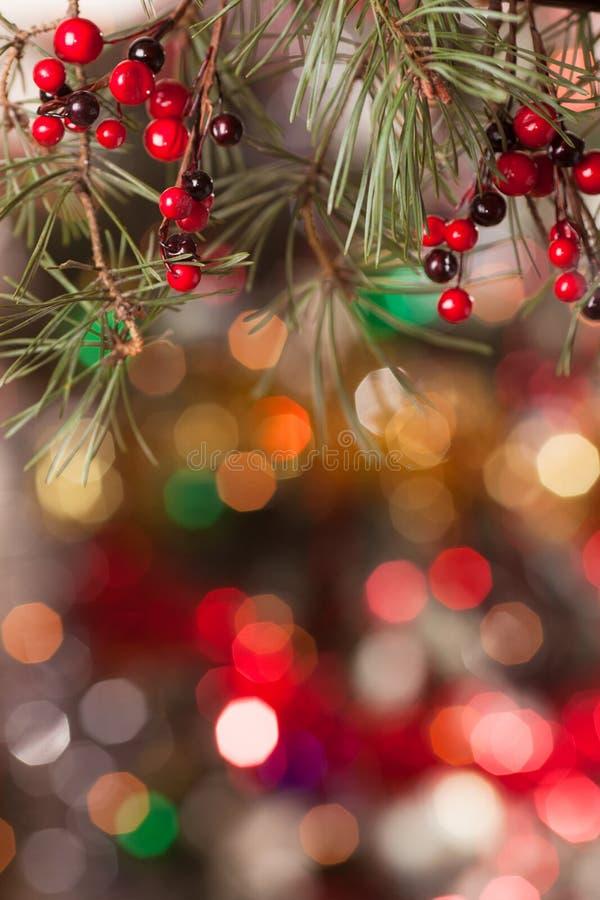 Ramas del pino y bayas rojas en el bokeh imagen de archivo