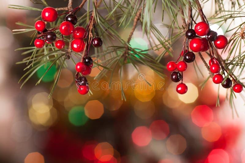 Ramas del pino y bayas rojas en el bokeh fotos de archivo