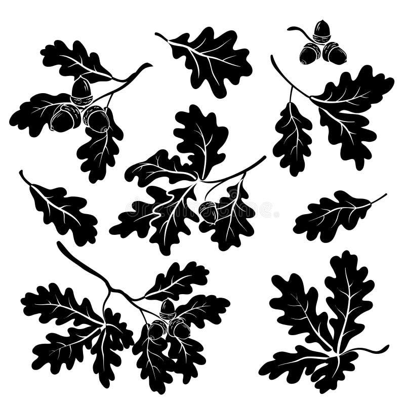 Ramas del roble con las bellotas, siluetas ilustración del vector