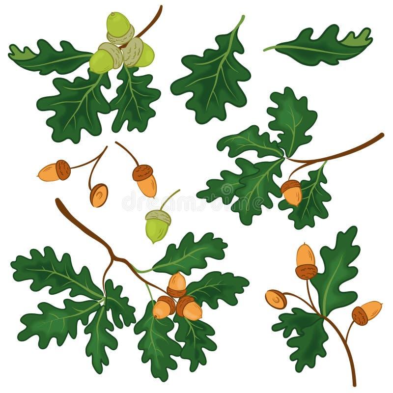 Ramas del roble con las hojas y las bellotas libre illustration