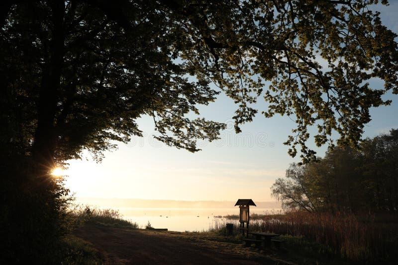 Ramas del roble en la orilla de un lago en la salida del sol foto de archivo