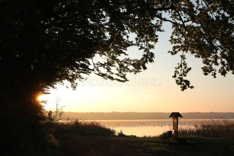 Ramas del roble en la orilla de un lago en la salida del sol imagen de archivo