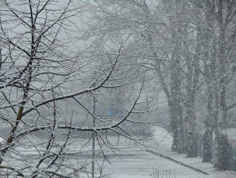 Ramas desnudas de árboles debajo de la nieve que cae foto de archivo