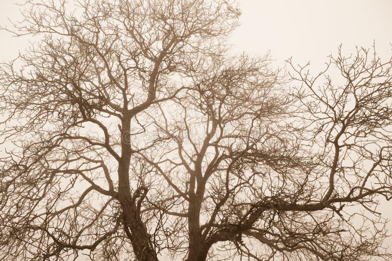 Ramas desnudas del top del árbol imagenes de archivo