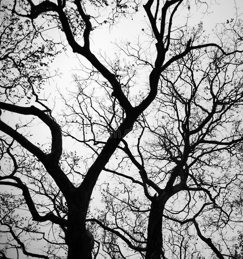 Ramas en el invierno foto de archivo libre de regalías