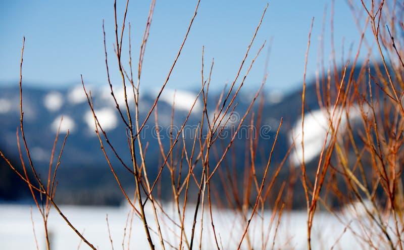 Ramas hermosas en las montañas europeas de las montañas borrosas en un día frío en invierno fotos de archivo libres de regalías