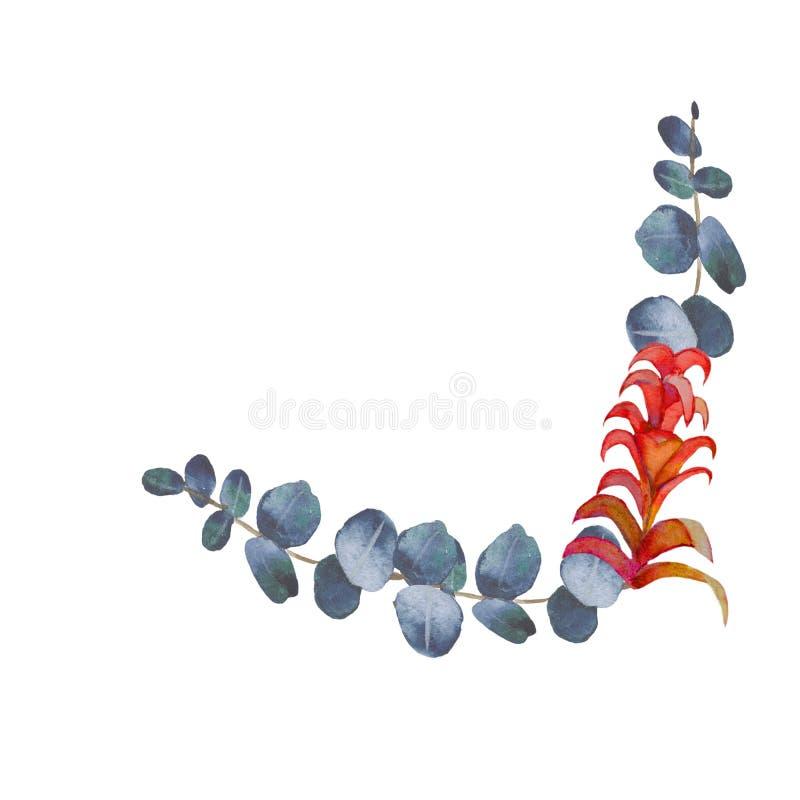 Ramas pintadas a mano de la acuarela con el eucalipto verde y la flor exótica ilustración del vector