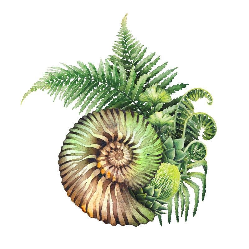 Ramas prehistóricas de la concha marina y del helecho de la acuarela ilustración del vector