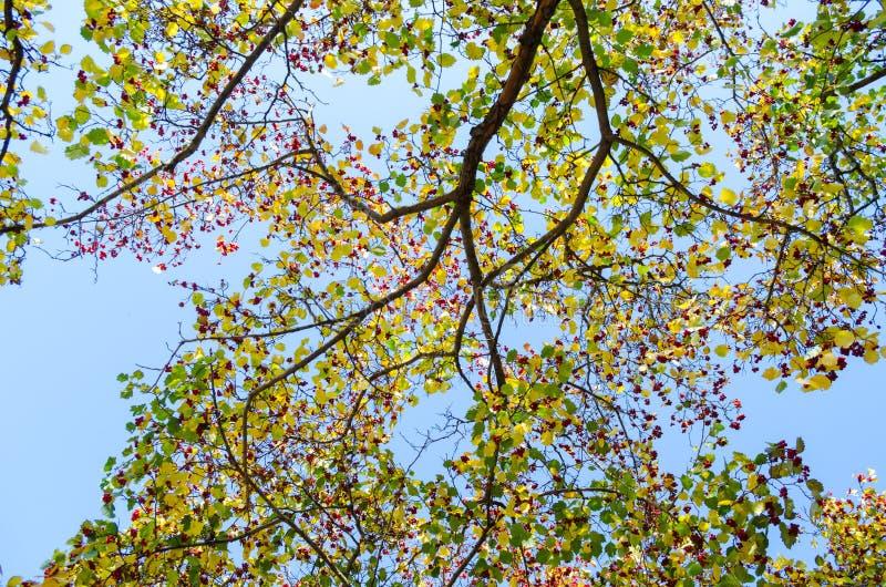 Ramas superiores del fondo de los árboles imagenes de archivo