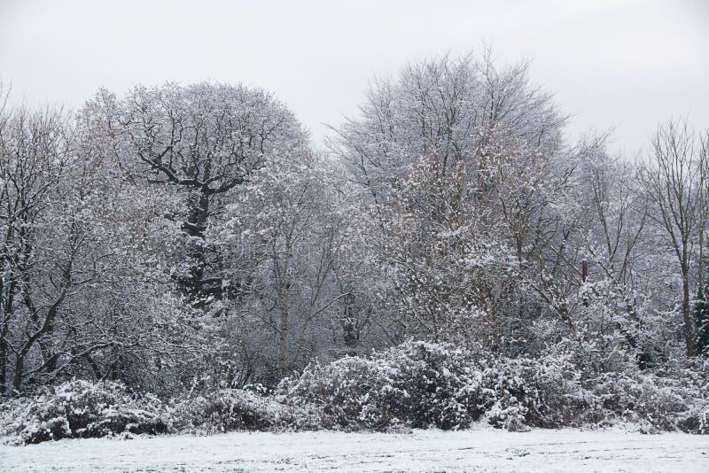 Ramas y árboles nevados fotos de archivo libres de regalías