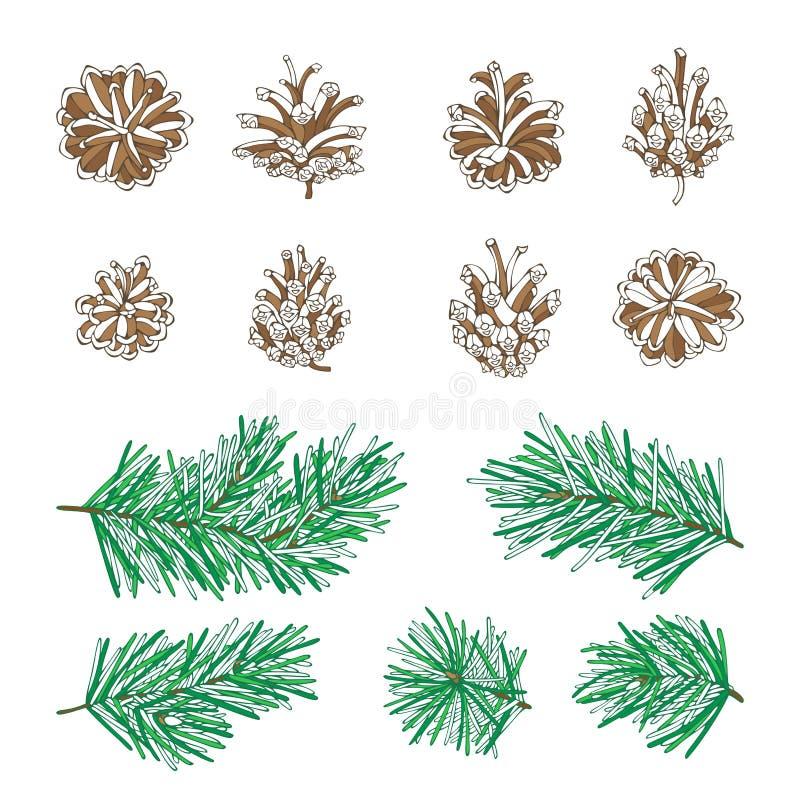Ramas y conos de árbol de pino del vector fijados stock de ilustración