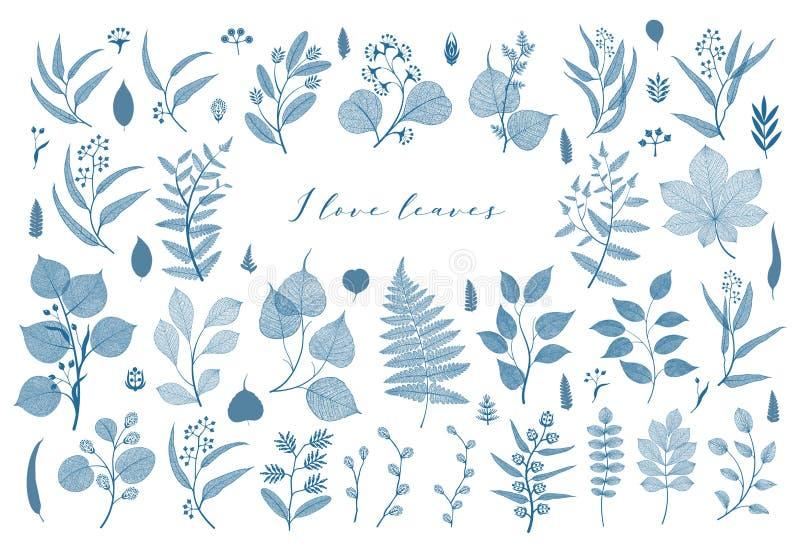Ramas y hojas, caída, primavera, verano Ejemplo botánico del vintage, elementos florales en color azul libre illustration