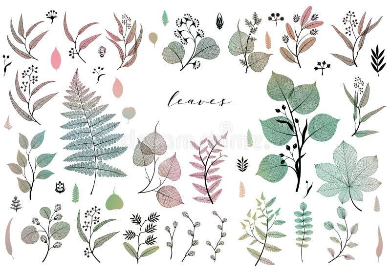 Ramas y hojas, caída, primavera, verano Ejemplo botánico del vintage, elementos florales en diseño colorido stock de ilustración