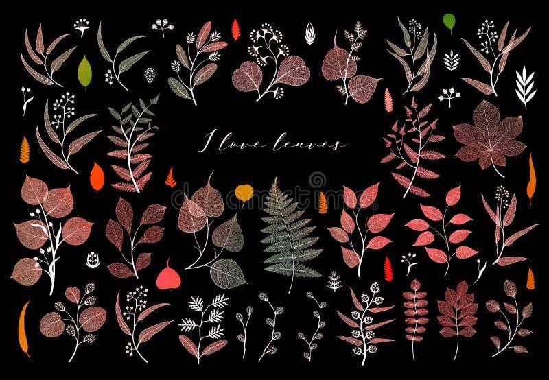 Ramas y hojas, caída, primavera, verano Ejemplo botánico en color brillante en fondo negro ilustración del vector