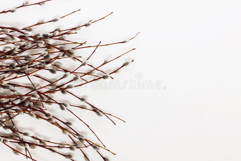 Ramas y ramo de sauce aislados en el fondo blanco fotos de archivo