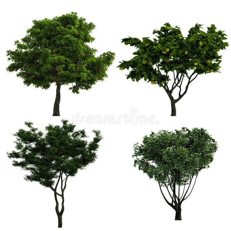 Ramassage d'arbres image stock