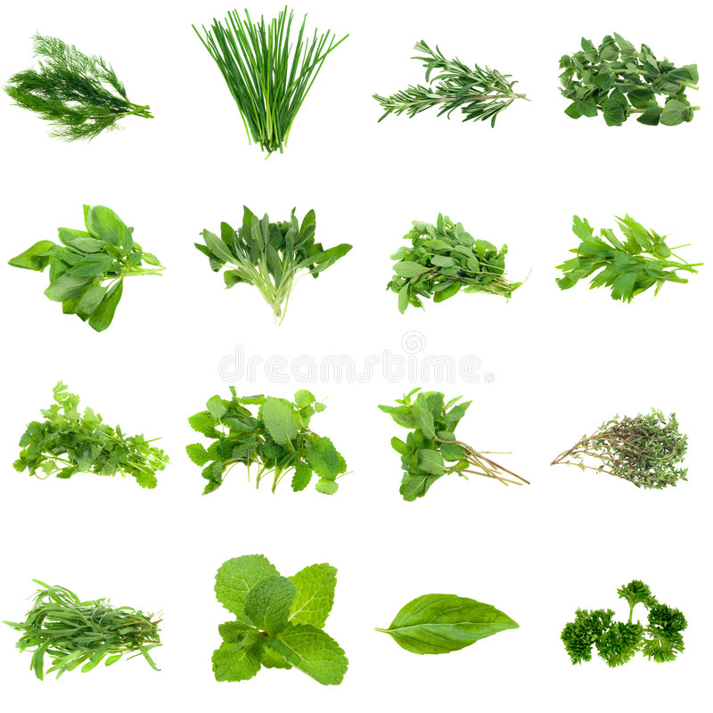 Ramassage d'herbes images stock