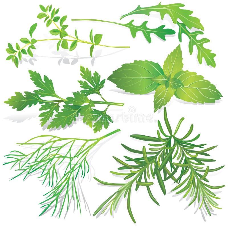 Ramassage d'herbes fraîches illustration libre de droits