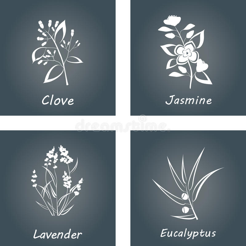 Ramassage d'herbes Labels pour les huiles essentielles et les suppléments naturels Lavande, eucalyptus, jasmin, clou de girofle illustration stock